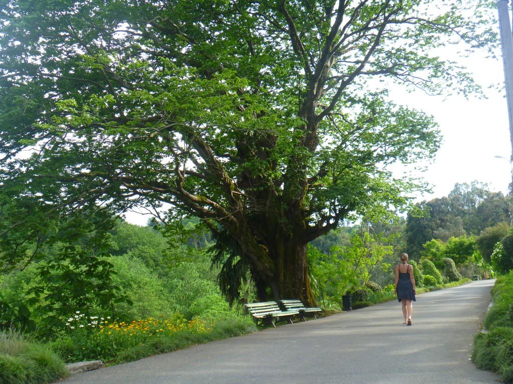 ich laufe auf einer der Haupstraßen durch Bäume und Büsche