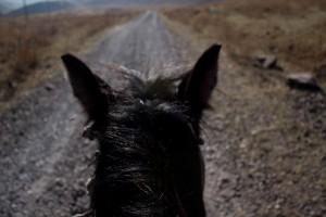 Kirgisistan auf dem Pferderücken