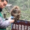 El Día que un Macaco Me Atacó
