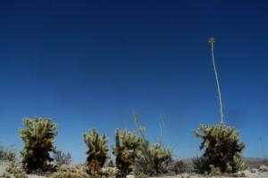 Wind, Wüste und Salzwolke– Baja California mit dem Fahrrad Teil 2