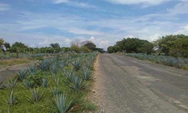 Im Land der Mariachis und des Tequilas – Jalisco mit dem Fahrrad