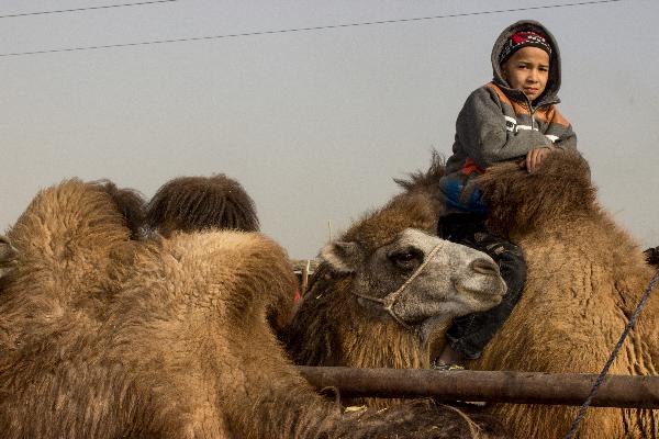 Auf dem sonntäglichen Tiermarkt - auch Lebendwarenmarkt genannt