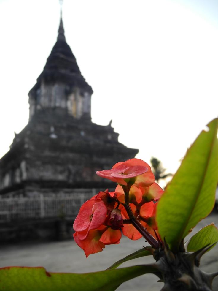Buddhist Templeinside Luang Prabang