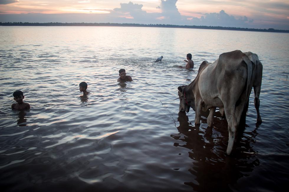 La vaca comparte el río con nosotros.