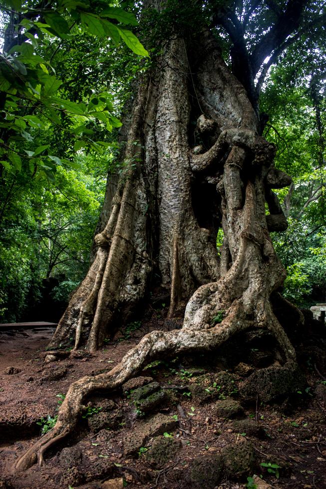 El gran Árbol Maestro