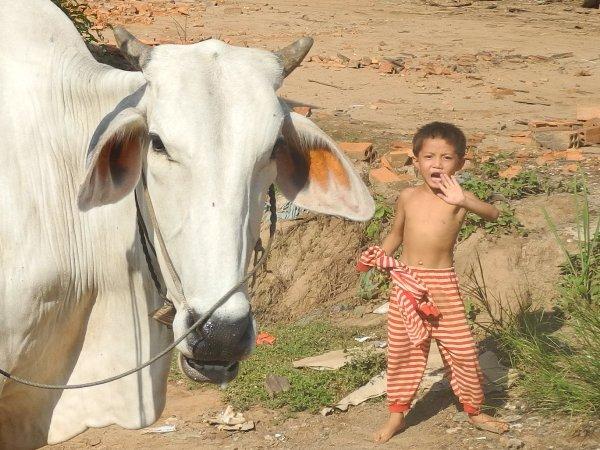 Wir haben die volle Aufmerksamkeit der Kinder und Kühe