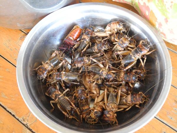Eine Schale voller Käfer