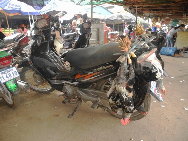 Hühnertransport in Kambodscha