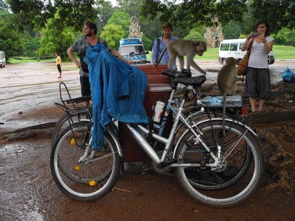Affen auf den Fahrrädern in Angkor Wat