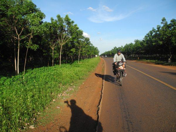 Gummibaumplantage in Kambodscha