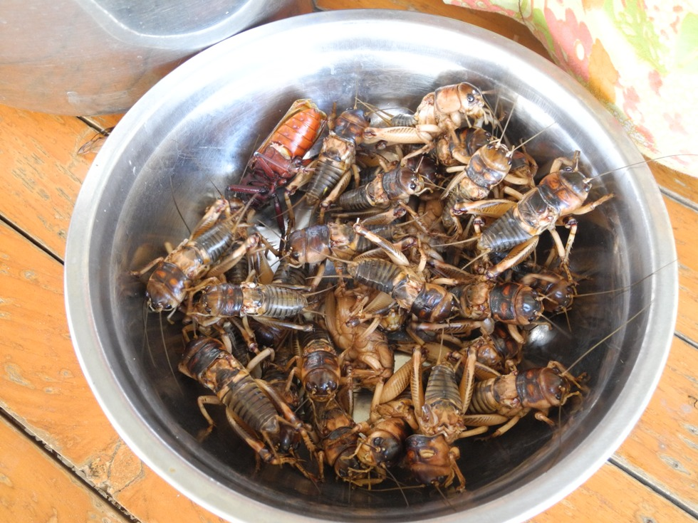 The Khmer like their bugs well roasted. These are still raw and alive