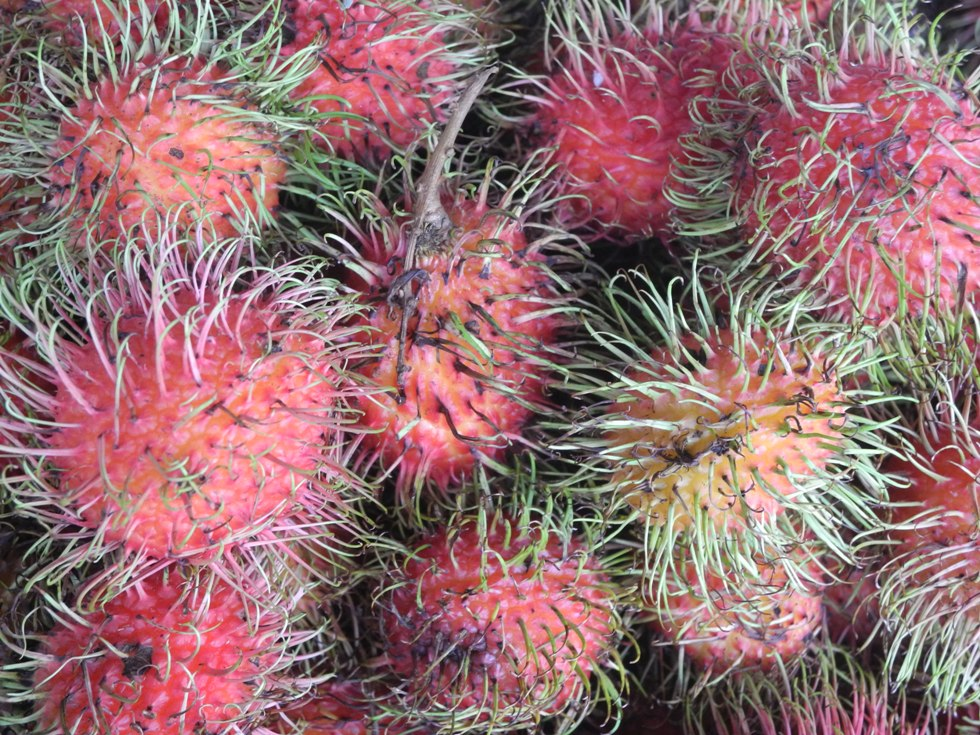 Hairy Rambutan