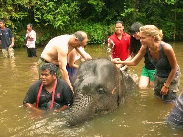 Bathing the baby elephant