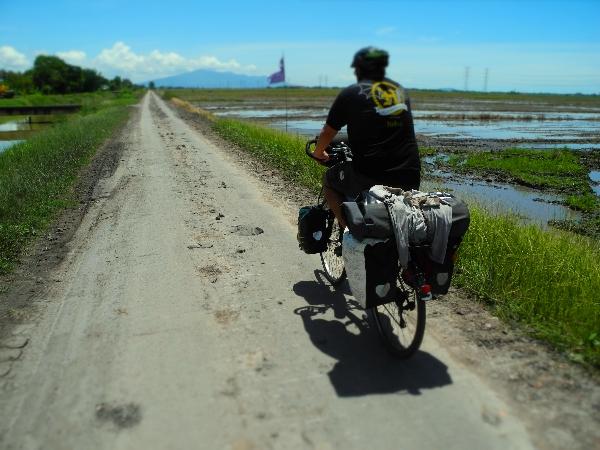 Roberto cycles through Kedah's Paddy fields
