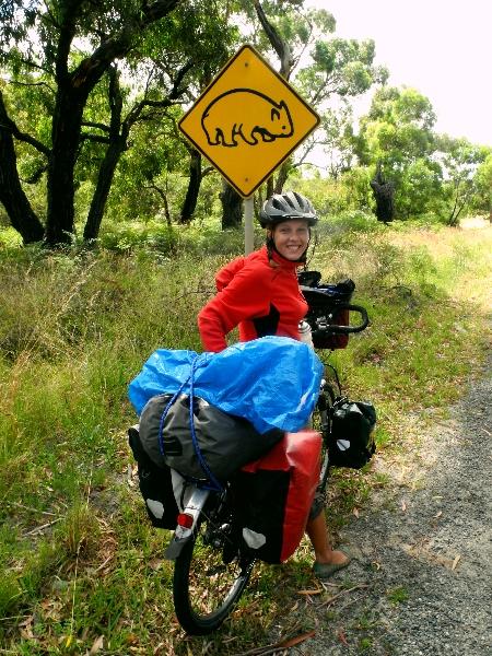 Wombats crossing!