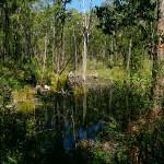 Der Rail Trail führt durch von Buschfeuer beschädigte Wälder und Sumpflandschaft