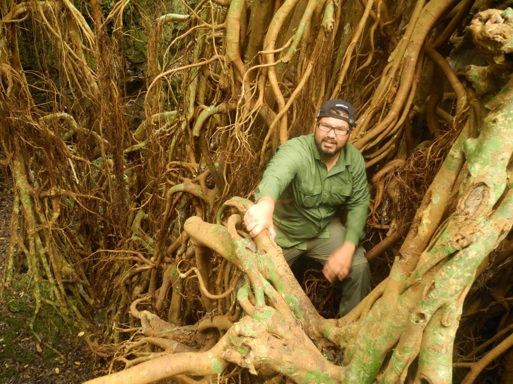 Climbing the world's biggest Ovava tree