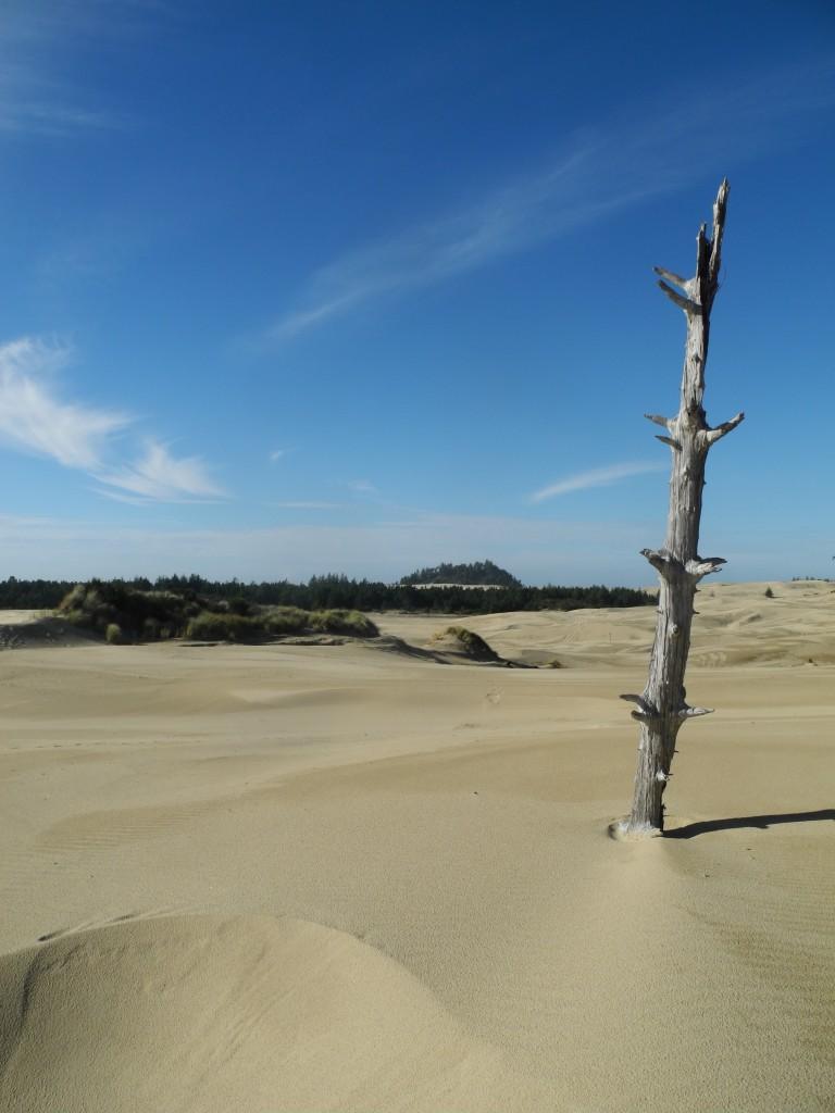 Dunes in Oregon