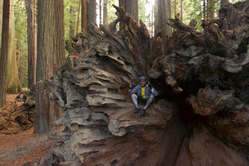 Inside a redwood tree
