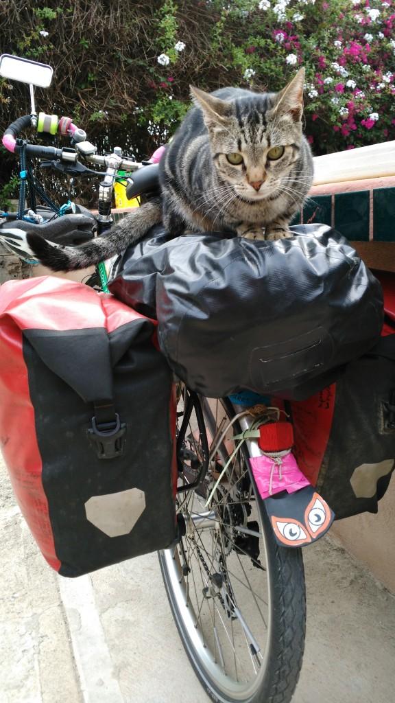 Cat on my bike