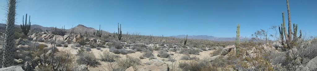 Baja California Wüstenlandschaft