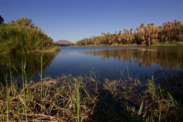 Oasis en San Ignacio BCS
