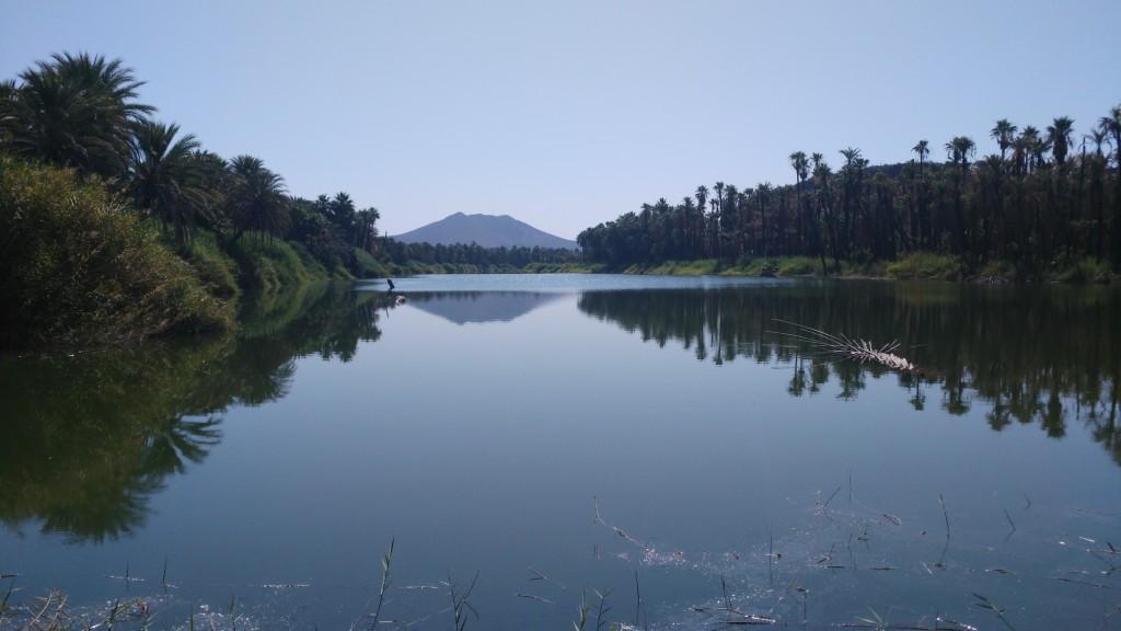 Oasis San Ignacio