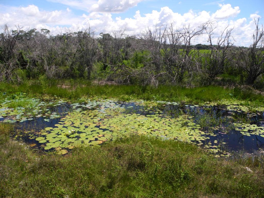 Campeche swamp landscape