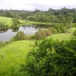 Beautiful nature in the Khao Yai National Park